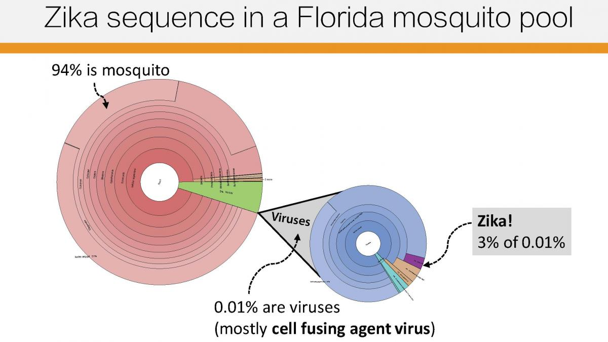 zika graphic